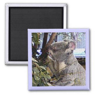 Adorable Koala Magnet