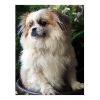 Adorable Long Hair Rescue Dog Postcard