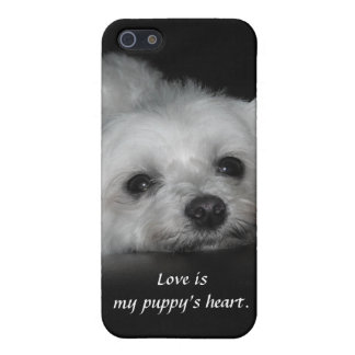 Adorable Loving Maltese Puppy iPhone 5/5S Cover