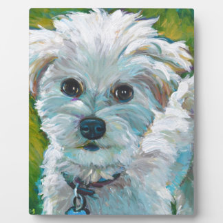 Adorable MALTIPOO Plaque