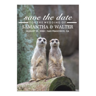 Adorable Meerkats Funny Expression Save The Date Magnetic Card
