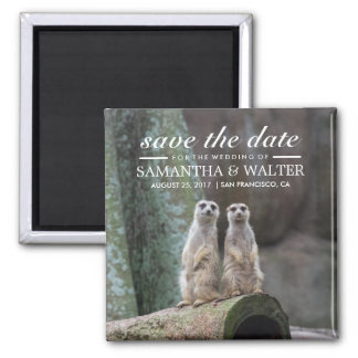 Adorable Meerkats Save The Date Square Magnet