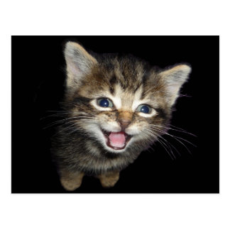 Adorable Meowing Kitten Cat Postcard