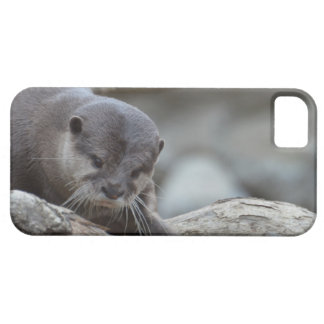 Adorable Otter iPhone 5 Case