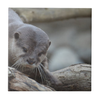 Adorable Otter Tile
