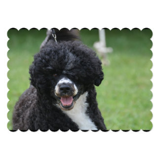 Adorable Portuguese Water Dog 5x7 Paper Invitation Card
