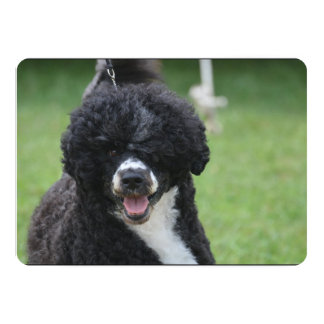 Adorable Portuguese Water Dog Card