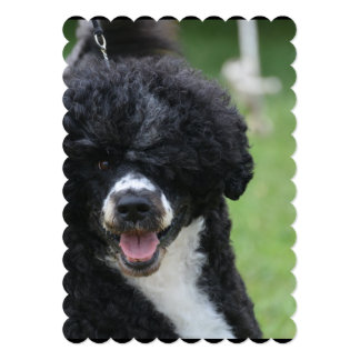 Adorable Portuguese Water Dog Cards