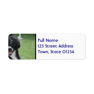 Adorable Portuguese Water Dog Return Address Label