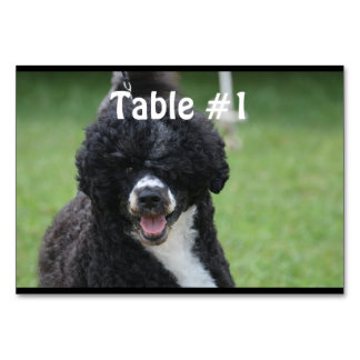 Adorable Portuguese Water Dog Table Card