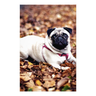 Adorable Pug Rests On The Autumn Foliage Customized Stationery