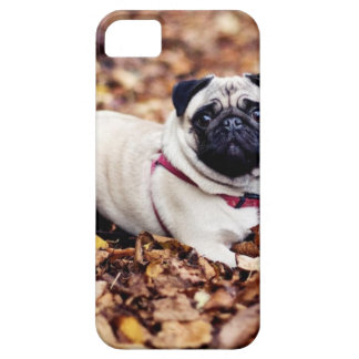 Adorable Pug Rests On The Autumn Foliage iPhone 5 Case
