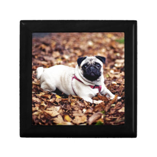 Adorable Pug Rests On The Autumn Foliage Keepsake Boxes