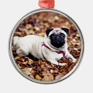 Adorable Pug Rests On The Autumn Foliage Silver-Colored Round Ornament