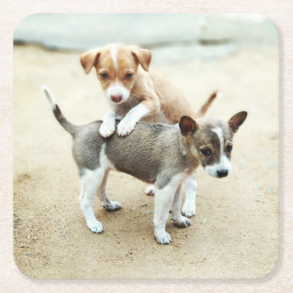 Adorable Puppies Playing on Beach Square Paper Coaster