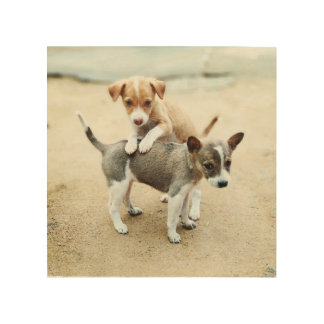 Adorable Puppies Playing on Beach Wood Wall Decor