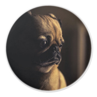 Adorable purebred pug ceramic knob