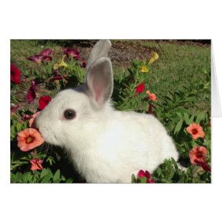 Adorable Rabbit Note Card