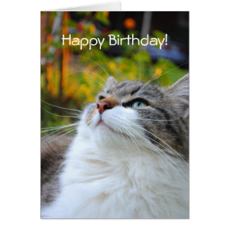 Adorable Ragdoll Cat Happy Birthday Card