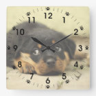 Adorable Rottweiler Puppy Square Wall Clock