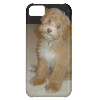 Adorable Schnoodle puppy iPhone 5C Cover