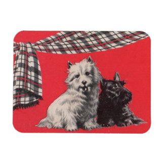 adorable Scottish terriers Magnet