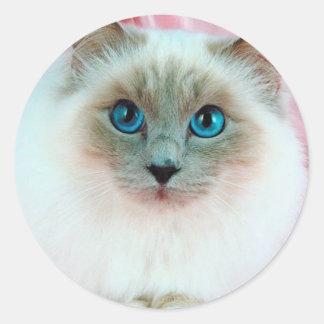 Adorable Siamese Cat 1 Classic Round Sticker