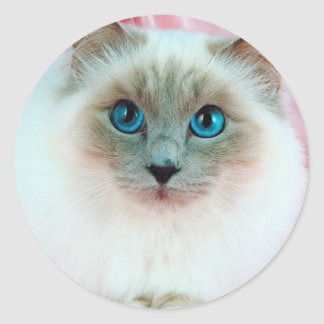 Adorable Siamese Cat 1 Round Sticker