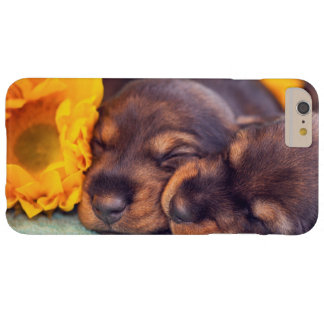 Adorable sleeping Doxen puppies Barely There iPhone 6 Plus Case