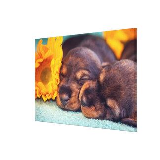 Adorable sleeping Doxen puppies Canvas Print