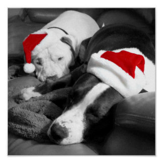 adorable sleepy pitbull puppies santa christmas poster