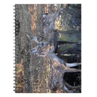 Adorable Spotted Fawns Notebook