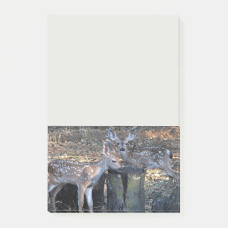 Adorable Spotted Fawns Notes