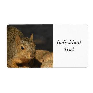 Adorable Squirrel