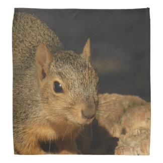 Adorable Squirrel Bandana