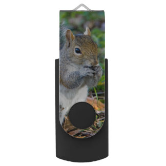 Adorable Squirrel Eating USB Flash Drive