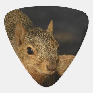 Adorable Squirrel Guitar Pick