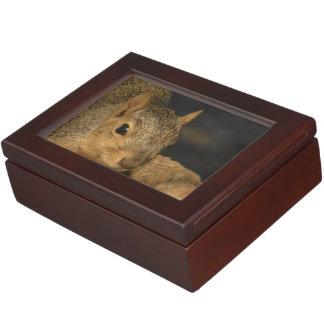 Adorable Squirrel Keepsake Box