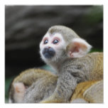 Adorable Squirrel Monkey Poster