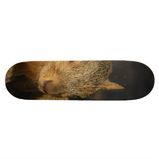 Adorable Squirrel Skateboard