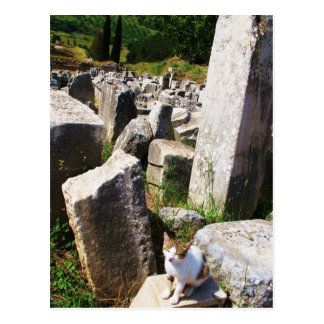 Adorable stray cat living in the ruins of Ephesus Postcard