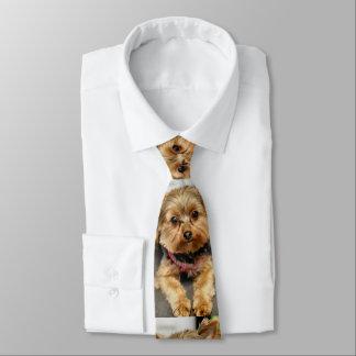 Adorable Tie