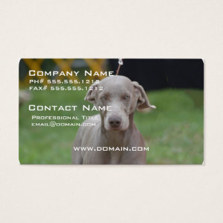 Adorable Weimaraner Business Card