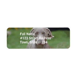 Adorable Weimaraner Return Address Label