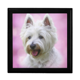 Adorable west highland white terrier gift box
