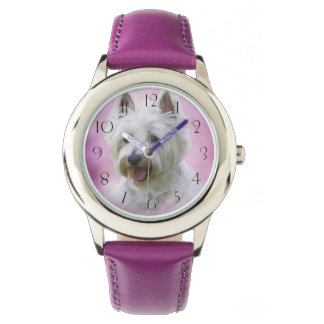 Adorable west highland white terrier watches