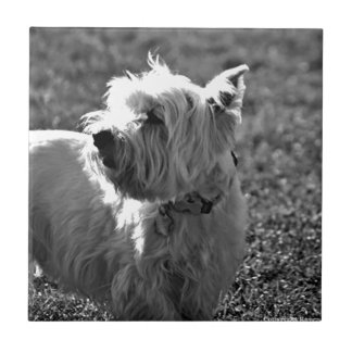 Adorable Westie Terrier Collection Tile