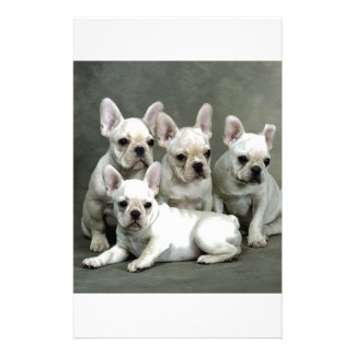 Adorable White French Bulldogs Personalized Stationery