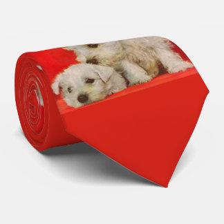 adorable white terrier puppies tie