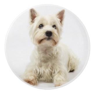 Adorable White West Highland Terrier Ceramic Knob
